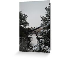 Snowy Heron Perched on Log - Assateague, MD Greeting Card