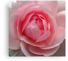 Always a rose Canvas Print