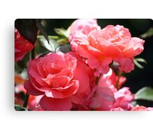 Perfect roses Canvas Print