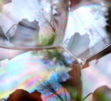 Photographer Inside Four Bubbles Sticker