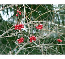 Winter Fruit  Photographic Print