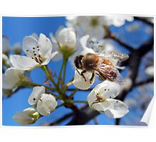 HONEY BEE ON A BLOSSOM (5) Poster