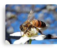 BEE PERFECT Canvas Print