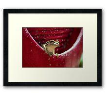 Floridian Frog In Vase  Framed Print