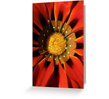 Gazanea Flower from Morgan  Greeting Card