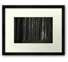 The Matrix Codes a Forest Framed Print