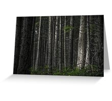 The Matrix Codes a Forest Greeting Card