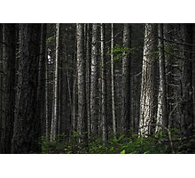The Matrix Codes a Forest Photographic Print