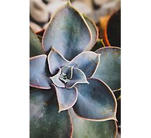 close up of succulent Photographic Print