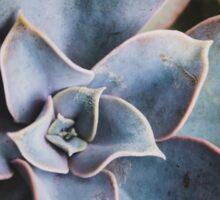 close up of succulent Sticker
