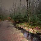 TAKE A WALK WITH ME IN THE FOREST by leonie7