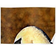 'Swans Eye' Poster