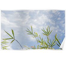 Bamboo Sky Poster