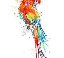 Wild Scarlet Macaw by AmyHollidayArt