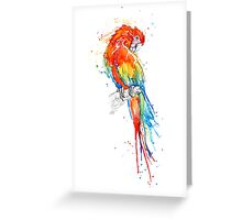 Wild Scarlet Macaw Greeting Card