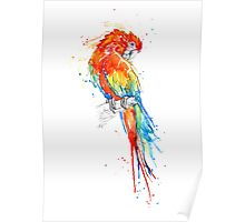 Wild Scarlet Macaw Poster