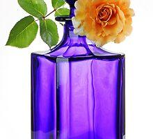 Rose on a Blue Bottle by rogerash