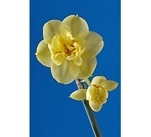 Yellow Narcissus Photographic Print