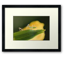 After Molting Framed Print