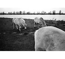 Middelwaard, The Netherlands. Photographic Print
