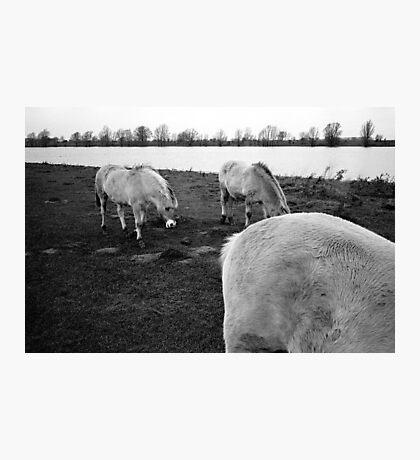 Middelwaard, The Netherlands. Photographic Print