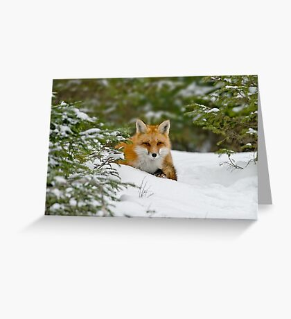Red Fox In Snow Greeting Card