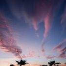 Palm Tree Sunset by barnsis