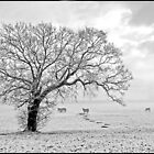 Winter Pasture by ten2eight