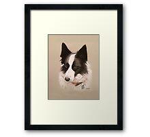 Mia the stunning Border Collie Framed Print