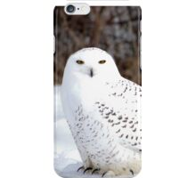 Beautiful Snowy Owl iPhone Case/Skin