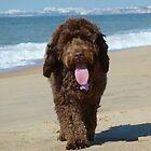Beach Bear by Oliver Lucas