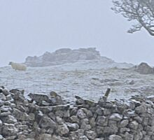 Snow in the Dales Sticker