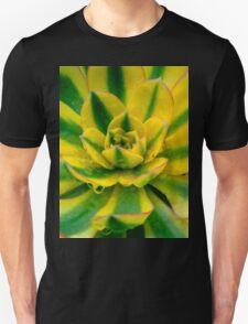 Echeveria Compton Carousel Cactus T-Shirt