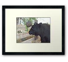 Contemplating the Carrot Framed Print