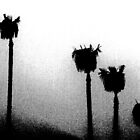 Foggy Palms by Chet  King