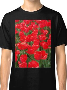 Belgian Tulips in Red Three Classic T-Shirt