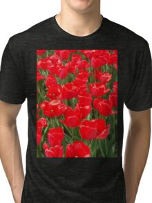 Belgian Tulips in Red Three Tri-blend T-Shirt