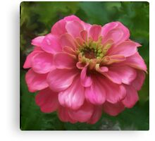 Pink Zinnia Painting Canvas Print