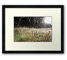 Sunrise through a grassy spider webs Framed Print