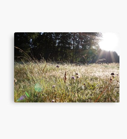 Sunrise through a grassy spider webs Canvas Print