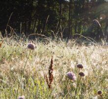 Sunrise through a grassy spider webs Sticker