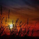 Nocturnal Sunset by TOM YORK