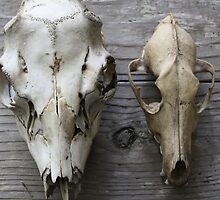PNW Wildlife - Deer and Coyote Skull by osteal