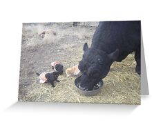 Turkey for Lunch! Greeting Card