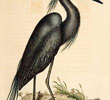 Vintage Heron by monkandpoet