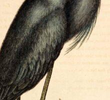 Vintage Heron Sticker