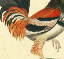 Vintage Pheasant Sticker