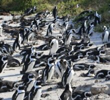 Penguin Colony in False Bay at the Boulders Sticker