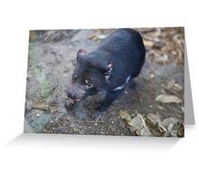 Tasmanian Devil at Taronga Zoo Greeting Card
