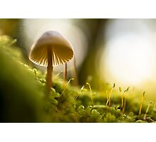 Forest Mushroom Fine Art Photography 0008 Photographic Print